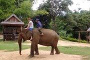 Balade-au-dos-d-elephant-1