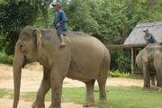 Balade-au-dos-d-elephant-2