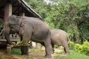 Village-d-elephant-1
