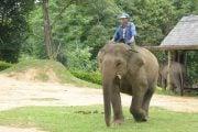 Village-d-elephant-2